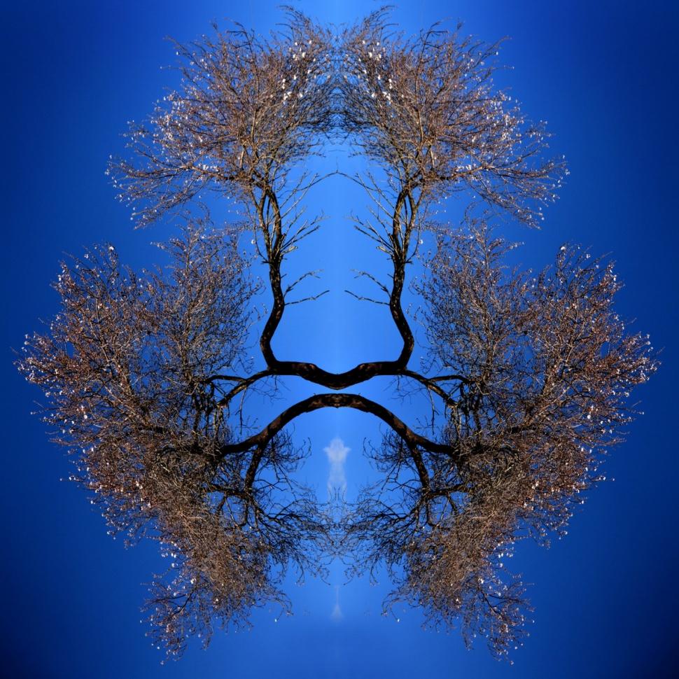 Photomacchie   -      (Libera  interpretazione dei test di Rorschach)  © 2011